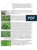 Grasses found in Pampanga State Agricultural University