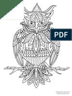 6_Owl_Zenacolor.pdf
