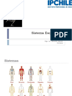 1.1 Sistema Esqueletico