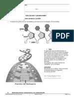 Guía de ADN y Cromosomas