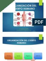 ORGANIZACIÓN DEL CUERPO HUMANO.pptx