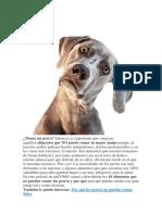15-01-19 Tema Perros, Alimentacion Etc.