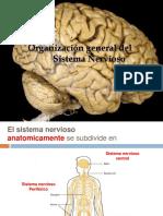 1. - Organización Del Sistema Nervioso