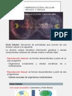 2.4Ciclo y reproducción celular Mitosis y Meiosis (1)