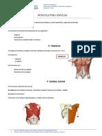 Espalda - Musculatura y Anatomía