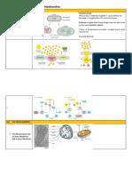 Flashcard - UTS Biosel II
