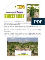 Papaya Sweet Lady-Variety Features