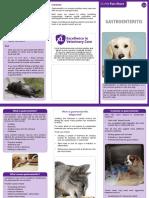 Final Gastronenteritis Leaflet