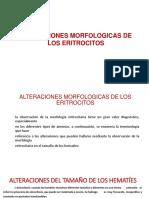 morfologia de los eritrocitos