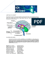 Tipos de Neuronas Clase de Psicologia