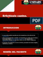 Erlichiosis Canino
