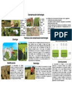 Infografia - Importancia de La Conservacion de Forrajes