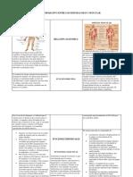 Cuadro Comparativo Entre Los Sistemas Oseo y Muscular
