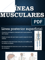 Lineas Musculares Inferior