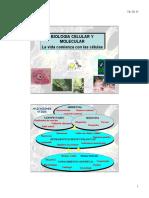 Unidad 1- Estructura y Organización Celular - Molecular