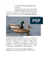 Pato Silvestre