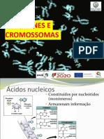 Ppt Dna, Genes e Cromossomas