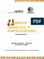 UCHUVA COSECHA