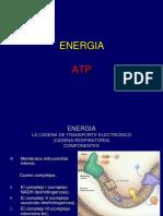 Bioenergetica-Fotosintesis-2019