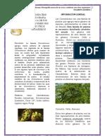 1 Cannabaceas Monografia Acerca de Sus Usos y Simbiosis Con Otros Organismos