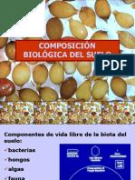 biologia del suelo.ppt