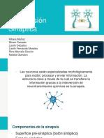 Transmisión Sináptica-1
