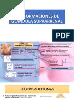Malformaciones de Glandula Suprarrenal