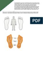 Él Dividió El Cuerpo Humano en 10 Zonas Longitudinales Que Recorren Verticalmente Todo El Cuerpo Desde La Cabeza a Los Pies Abarcando Todos y Cada Uno de Los Órganos y Tejidos