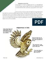Owl Adaptations