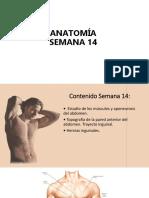 Resumen de Musculos del abdomen UPAO