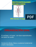 5-Tejido_conectivo_especializado_-_hueso_y_cartilago.ppt;filename_= UTF-8''5-Tejido conectivo especializado - hueso y cartilago