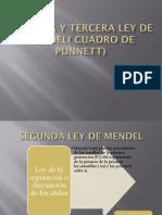 Segunda y tercera ley de Mendel