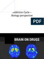 Addiction Cycle – Biology Perspective