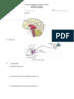 Nervous System Long Quiz