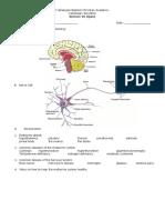 Nervous System Long Quiz Answer Sheet