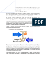 Mucocele,Bruxismo Patologia