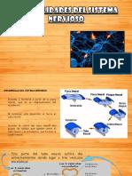 Sistema nervioso_clase Neuroanatomía II