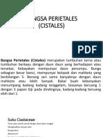 BANGSA PERIETALES (CISTALES).pptx