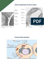 macromolecole- citologia e istologia