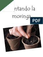 La Moringa