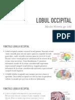 Lobul Occipital