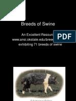 Breeds Swine Selfstudy