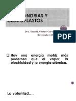 Mitocondrias y Cloroplastos (1)