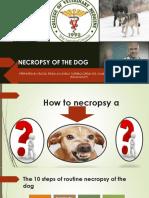 Necropsy Report 1.pptx