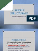 LIPIDELE STRUCTURALE.pptx