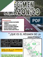 Regimen Amazonico- Grupo 8