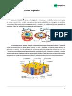 Extensivoenem Biologia1 Revisão Sobre Citoplasma e Organelas 11-11-2019 11000cd6e260fe4fc6396557b5cefacf