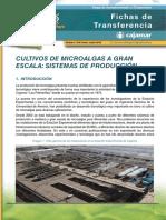 018-microalgas2-1467367279