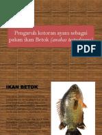 Pengaruh Kotoran Ayam Sebagai Pakan Ikan Betok (