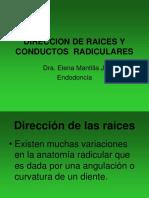 Direccion de Raices y Conductos Radiculares 2